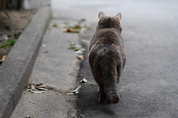 カナちゃん パステルさび猫 べっこう猫
