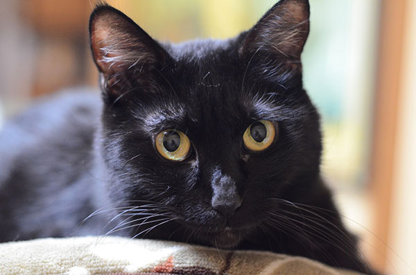 まっちゃん マチルダ 黒猫