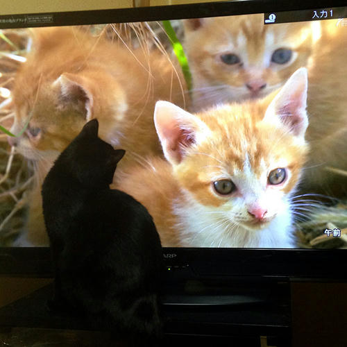 まっちゃん マチルダ黒猫