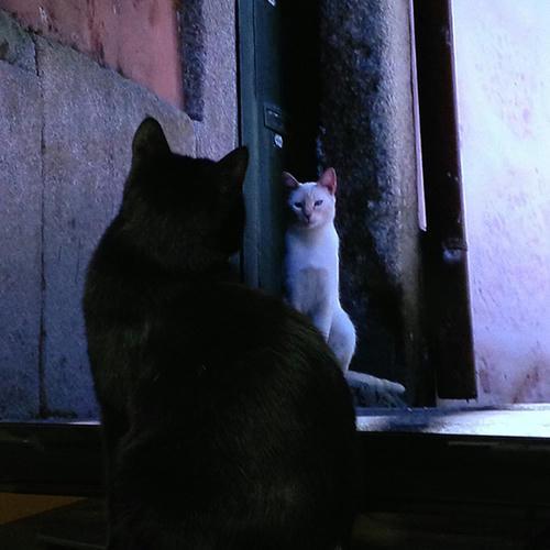 まっちゃん 世界ネコ歩き