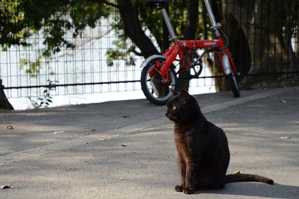 黒猫 自転車
