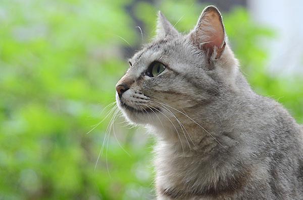 ミコちゃん キジトラ猫 パステル