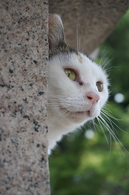 ミケちゃん 三毛猫