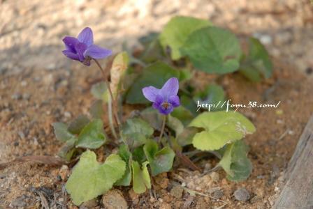 100104flower01.jpg