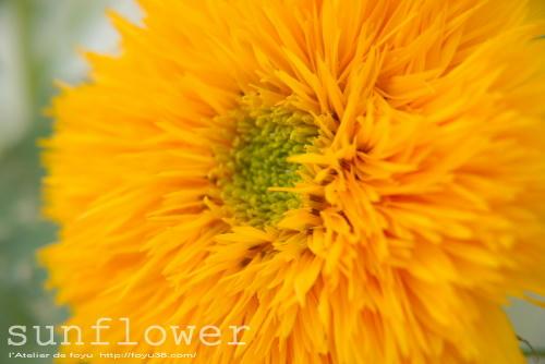 100710flower04.jpg