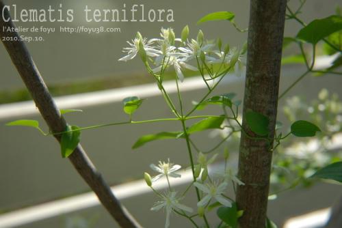 100910flower01.jpg