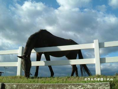 馬の写真2
