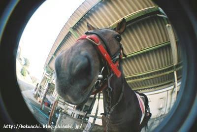 馬の鼻の写真