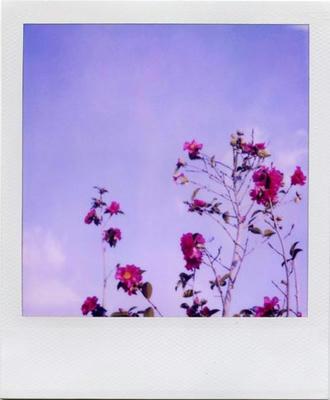 空と花の写真