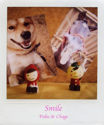 スマイルの写真
