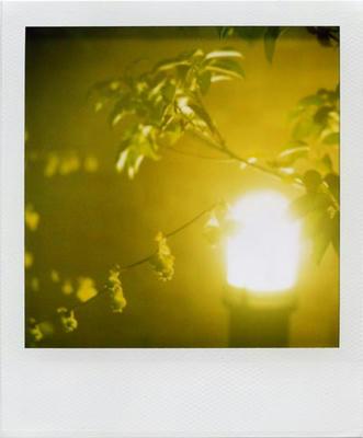 ランプと木の影の写真