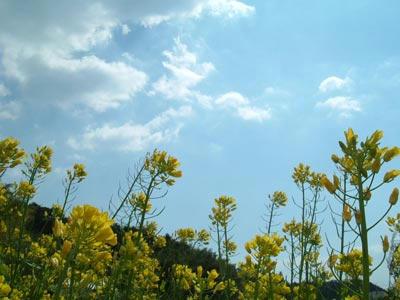 葉の花の写真