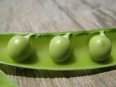 エンドウ豆の写真