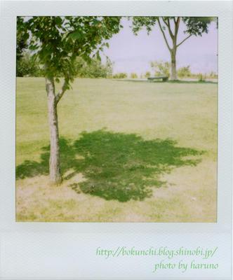 木陰の写真