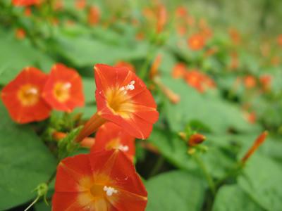 秋の花の写真
