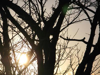 夕日の写真