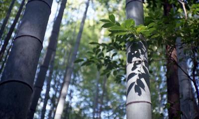 竹と葉の写真
