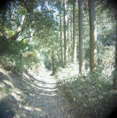 森のトンネルの写真