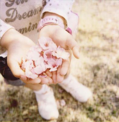 手のひらの春の写真