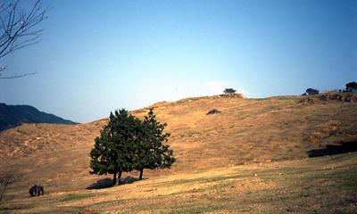 丘の木の写真