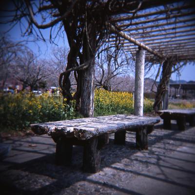 ベンチの写真