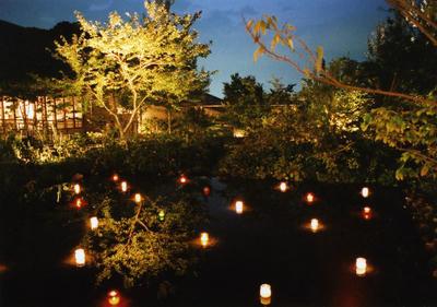 夜の植物園の写真