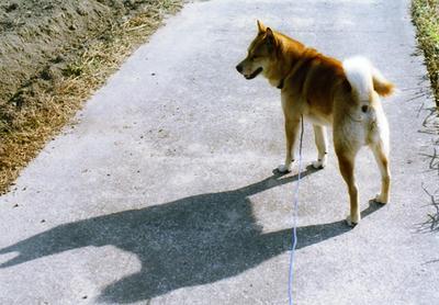 プクの影の写真