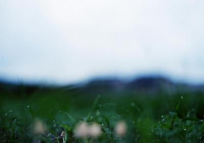 キノコの写真