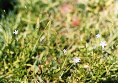 小さな花の写真