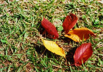 木の葉の写真