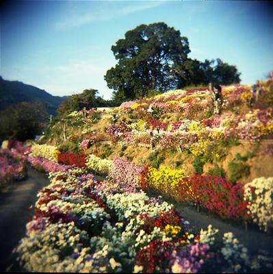 菊の丘の写真