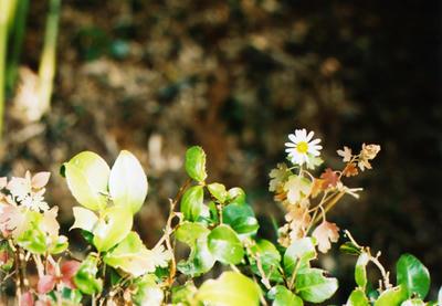 小道に咲く花の写真