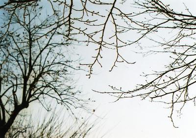 枯れ木の写真