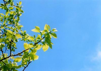 柿木の写真