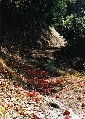 椿道の写真