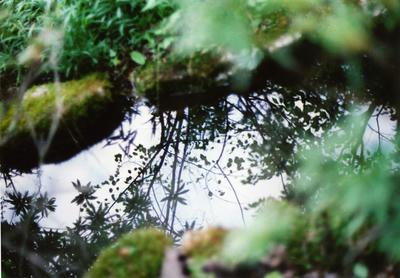 水面の影の写真