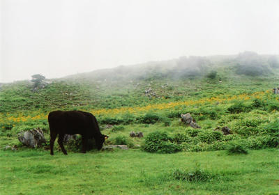 天狗高原の写真