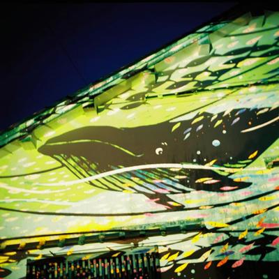 クジラの写真
