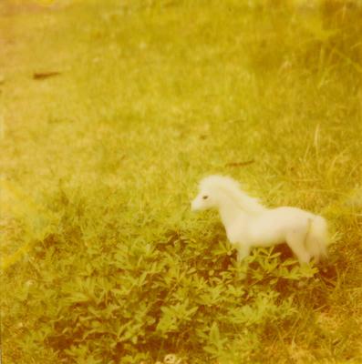 白馬の写真