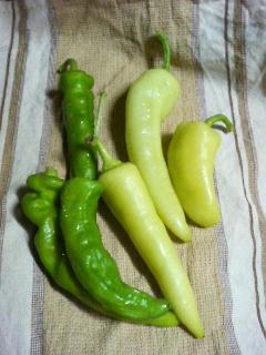 甘長唐辛子と謎の野菜。