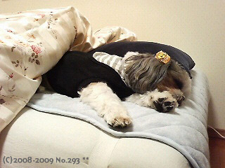 茶々丸に占拠されたベッド。