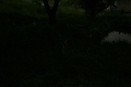 hotaru710-5.JPG