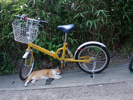鶴岡八幡宮の途中にいた猫