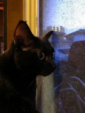 ホルモン番長 黒猫リンダ