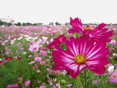 にった花トピア