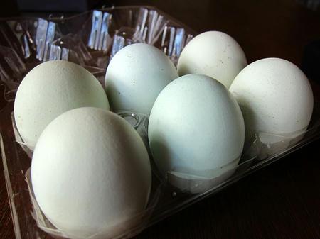 アローカナ有精卵