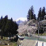 sakura-fuji.jpg