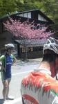 misaka20100516sakura.jpg