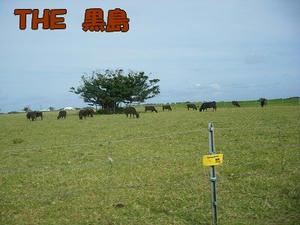 DSCF4667.jpg