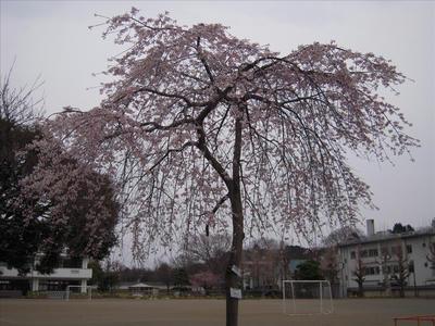 20090404-003.jpg